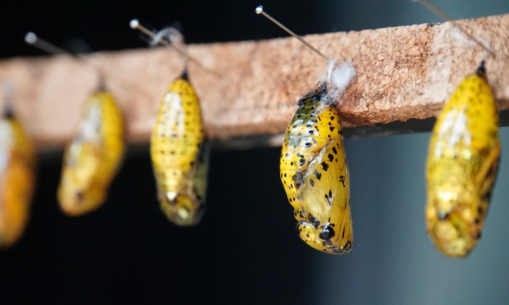 Art of Advocacy: When It is Time To Cocoon